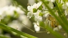 D3X_0671_fl (dmitrytsaritsyn) Tags: spider insect nikon r1c1 105mm d3x