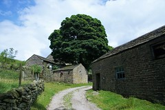 05 July 2017 Chinley Edale 9 Miles (35) (AJ Yakstrangler) Tags: yakstrangler chinley edale walk countryside tree
