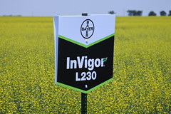 bayer-showcase-nd-17-145 (AgWired) Tags: bayer cropscience showcase plot tour 2017 soybeans canola wheat cereals corn north dakota agwired zimmcomm new media chuck zimmerman