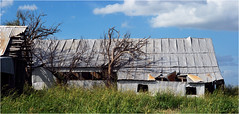 Abandoned farm sheds, Olney, Texas (Small Creatures) Tags: anamorphic cinemascope d60 barn abandoned derelict corrugated iscorama isco nikkorh85mm nikond60 olney tinroof texas youngcounty rural