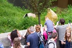 IMG_0515.jpg (wfvanvalkenburg) Tags: ouwehandsdierenpark panda familie