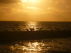 sunset Baltrum (Jörg Paul Kaspari) Tags: baltrum sommer 2017 buhne meer nordsee sunset sonnenuntergang light licht vogel vögel birds möwe möwen