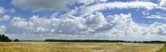Mecklenburger Weite (Don Bello Photography) Tags: mecklenburgvorpommern mecklenburg weite himmel himmelsbilder wolken getreide feld panorama panasonicphotographer panasonicfz1000 lumixphotographer lumixfz1000 fz1000 acdsee norddeutschland northerngermany reinhardbellmann donbello donbellophotography 50favorites 1000views 2000views 3000views 4000views 5000views 100favorites