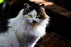 Gatas do Ipiranga (Marcos Simanovic) Tags: cat cats gatas gata felina felino felinas felinos feline felines pet pets simanovic
