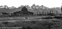 MOULTON BARN (Robert Aycock) Tags: wyoming barn wooden historic usa building grand western scenic sky tourism teton homestead park snow mormon moulton national landscape grandtetonnationalpark rustic jacksonhole beautiful old field mormonrow landmark mountain vacation west travel row peaceful nature america district white mountains vintage ranch rocky outdoor summer twentiethcentury settlement remains background fence clouds americanwest outdoors pioneer blackandwhite destination scenery cloud historicplace rural scene winter johnmoultonhomestead door planks nobody remnant weathered simplicity altitude highelevation cowboyhistory dawn yellowstonenationalpark wyomingmountains jackson famous