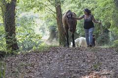 Veneno (maxis965) Tags: canon 6d sigma 105f28 cavallo bosco foglie albero sottobosco sky