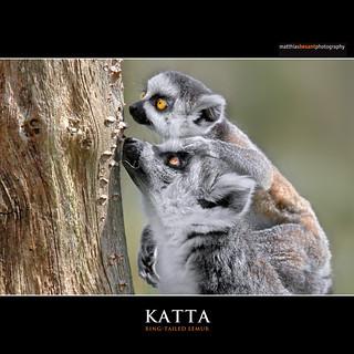 KATTA