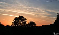 Vol d'oiseaux (Un instant photo) Tags: aveyron sunset oiseaux soleil sun landscape campaign nature ciel