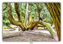 THE OCTOPUS / LA PIEUVRE (régisa) Tags: clères parc zoologique arbre tree octopus pieuvre analogie analogy normandie thuya thuja remarquable