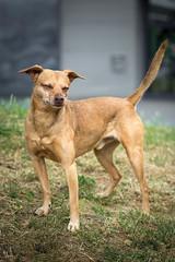 Tamron Fotorallye 2017 (nheyermeyer) Tags: köln tamronfotorallye2017 dog smile joke brown hund lächeln canine tier