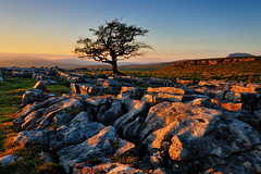 Winskill (images@twiston) Tags: sunset light cloudless warm lastlight thewinskilltree alone hawthorn tree thelimestonetree winskillstones winskill stones scar dales national park solitarytree lone solitary limestone pavement grikes clints sky northyorkshire yorkshire limestonepavement lonetree bleak stark fell rock rocks gnarled gnarly 3peaks yorkshire3peaks whernside ingleborough penyghent landscape yorkshiredalesnationalpark fields grass moors moorland moor langcliffe imagestwiston classicdales spring godsowncountry ribblesdale farm farmland wideangle wide angle dusk goldenlight goldenhour