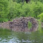 Beaver Lodge thumbnail