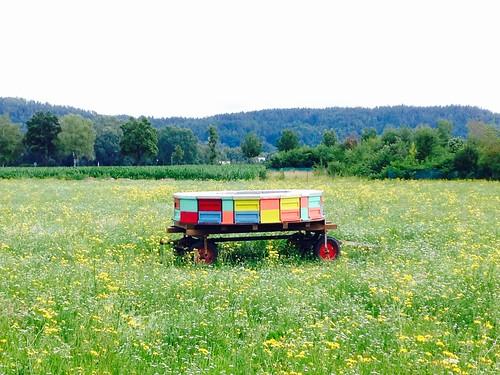 Miele in Klagenfurt