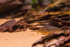 _MG_9819 (dearwalrus) Tags: eheim vivaline 330 canon 70d sigma 1750 acuario aquarium
