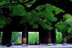 Big Gate (tez-guitar) Tags: architect tree kyoto temple green summer gate leicax1 leica nanzenji wood rain rainy