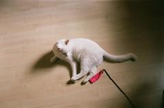 softie (szmenazsófi) Tags: smenasymbol smena lomo lomosmena analog analogue film 35mm interior fujifilm fujicolor indoor cat feline