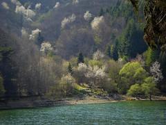 Primavera sul lago (fotomie2009) Tags: osiglia lago lake spring primavera water val bormida savona liguria italy italia trees alberi fiori oseria ngc npc