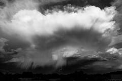 (el zopilote) Tags: 500 albuquerque newmexico sandiamountains landscape cityscape clouds trees canon eos 5dmarkii canonef24105mmf4lisusm fullframe bw bn nb blancoynegro blackwhite noiretblanc digitalbw bndigital schwarzweiss monochrome