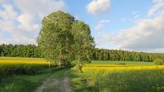 Burghaun, 25.5.17 (ritsch48) Tags: burghaun hessen rhön deutschland plätzer abendspaziergang