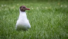 Urban Scavenger (Wayne Cappleman (Haywain Photography)) Tags: haywain photography wayne cappleman farnborough hampshire beaulieu national motor museum bird