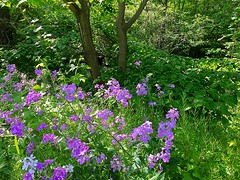 Woodland Clearing (8harpem) Tags: plants flowers woods trees nature landscape fingerlakes