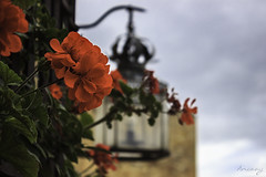 Flors a Pedraza (ancoay) Tags: castella flors pedraza geranio flowers flores gerani farola 7dwf ancoay canon600d