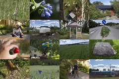 Summer Snaps (Steffe) Tags: collage photos summer haninge