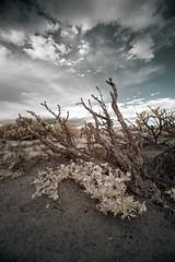 ([ raymond ]) Tags: infrared landscape newmexico santafe img5774edit