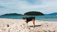 Dog (lua_baroni) Tags: mar praia rua fofo cachorro dog