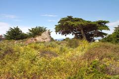 IMG_0016_18 Spanish Bay HDR (vicjuan) Tags: 20170625 美國 usa 加州 california montereycounty hdr tonemapping pebblebeach geotagged geo:lat=36608090 geo:lon=121951975