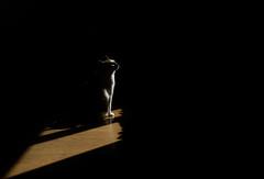 Avant l'orage — Nanterre, 8 juin 2017 (Stéphane Bily) Tags: stéphanebily chat cat nanterre hautsdeseine lumière rais rayon beam sunbeam explore