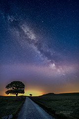 Milky Way (tbnate) Tags: malham yorkshire thedales yorkshiredales westyorkshire milkyway milky way road start astrophotography tree nikon nikond750 d750 samyang samyang14mm 14mm ultrawideangle ultrawide sky night outdoor outside stars nature landscape cloudlesssky dark lights vanishingpoint vanishing point