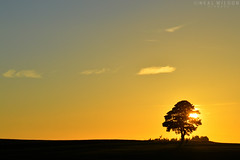 single tree (Neal J.Wilson) Tags: tree nature simple sunsets sunrise dawn dusk denmark d3200 danishlandscapes nikon nordic landscapes scandinavia summer