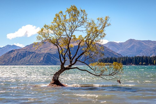 That Wanaka Tree-5