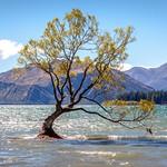 That Wanaka Tree-5 thumbnail