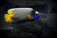 The precious pet I wanted as a child! (John (thank you for >1.5 million views)) Tags: preciouspets smileonsaturday tropicalfish fauna bristolgardensandzoo bristol zoo acquatic 7dwf