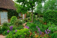 The gardens at the Manor House, Ayot St Lawrence (Jayembee69) Tags: ayotstlawrence manorhouse hertfordshire herts ngs nationalgardenscheme britain british uk unitedkingdom england english garden allium