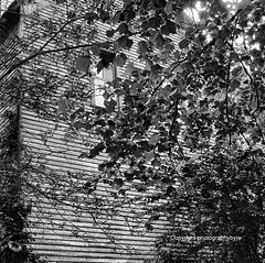 Clap Board Siding Old Building (Photographybyjw) Tags: clap board siding old building very worn original wood this found tennessee 1970s shot film photographybyjw weathered foliage tree black white rural country usa
