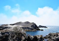 Bird Island-DSC_0900 (nokhum.markushevich) Tags: pointlobos birds california ocean pacific