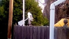 Neighbor's backyard - HFF (Maenette1) Tags: neighbors backyard windmill poles trees fence alley menominee uppermichigan happyfencefriday flicker365