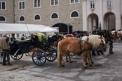 wartende Pferdekutschen, Salzburg