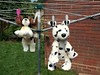 I Walk the Line (Heaven`s Gate (John)) Tags: iwalktheline washing line soft toy dog garden england dalmatian spaniel springer brock grass summer wash day johndalkin heavensgatejohn