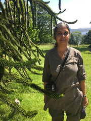 Troutbeck-Windermere-17.63 (davidmagier) Tags: aruna plants claifesouthlakeland cumbria england gbr
