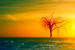 The red tree (Ans van de Sluis) Tags: ansvandesluis art fineart june landscape nature sea sunset surreal tree red redtree theredtree waves