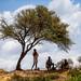 Children Tending Goats (Omo Valley, Ethiopia 2014)