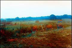 20160824-073 (sulamith.sallmann) Tags: landschaft tiere blur cotentin effect effekt filter folientechnik france frankreich geisterhaft kühe lahague landscape manche natur nature normandie rind rinder seltsam unscharf fra sulamithsallmann