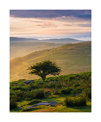 Holne Moor, Dartmoor, Devon, UK (SimonHMiles) Tags: dartmoor devon landscape moor moorland upland heath tree sunrise dawn summer morning mist fog