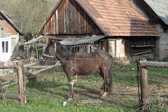 cheval à Ужок (8pl) Tags: chevel maisons grillage ukraine village campagne ужок