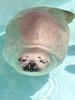 水族館55 (ののリサを信じろ) Tags: 水族館 白熊 カエル 蛙 シロクマ なまはげ 獅子舞 神社 桜 鯉のぼり アシカ