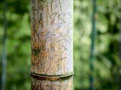 Bamboo Grafitti (joynerplanemaker) Tags: bamboo green lush grafitti